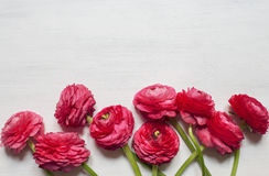 Some red peonies on white wooden background. Top view Royalty Free Stock Image