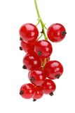 Some redcurrant berries. Isolated on the white background royalty free stock photos