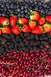 Some Redfruits over a wooden table. Some gooseberries, raspberries, strawberries and blueberries over a wooden table Stock Photo