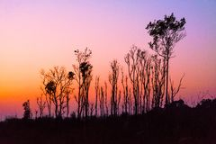 Some Ridiculous Trees silhouettes in line against Pink Twilight background. After Sunset royalty free stock photos