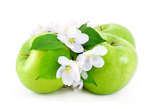Some ripe, green apples and white flowers . Some ripe,green apples and white flowers with young green leaves on white background royalty free stock photo