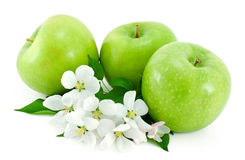 Some ripe, green apples and white flowers . Some ripe,green apples and white flowers with young green leaves on white background royalty free stock images