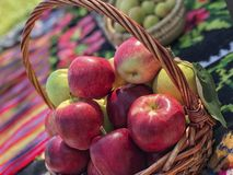 Some ripe red apples in a basket. Fresh ripe red apples in a basket royalty free stock image