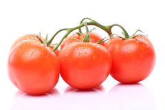 Some ripe tomatoes on a branch. Some ripe red tomatoes on a branch Stock Image