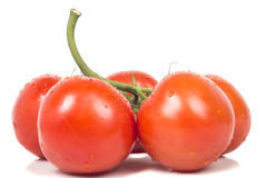 Some ripe tomatoes on a branch. A small sprig of small round red tomatoes Stock Image