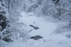 Some river left. Trees with snow in a forest , winter, mountain landscape watching out of a frozen river with some floating water royalty free stock photo