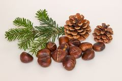 Some roasted chestnuts. On white background Royalty Free Stock Photo