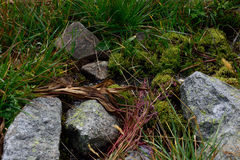 Some rocks and moss. Some rocks, moss and grass close-up Stock Photography