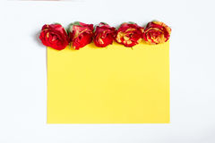 Some roses are laid out in a row over a clean sheet of paper. Some yellow-red roses are laid out in a row over a clean yellow sheet of paper Royalty Free Stock Photos