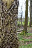 Some rough pattern of the tree in forest. Lovely walk in the forest one day in the spring Stock Images
