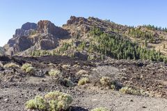 Some Rough scrub and pine trees grow scattered throughout the rugged lava landscape around the volcano El Teide on the island of T stock photos