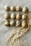 Some rows of quail eggs on linen fablic background. Top close-up view of some rows of quail eggs on linen fablic background. Concept of healthy nutritions and royalty free stock images