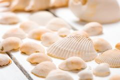 Some scattered cockleshells close up. Studio shot royalty free stock images