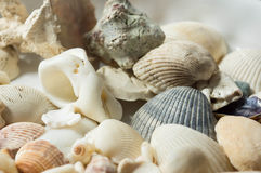Some scattered sea shells. Close up Stock Photo