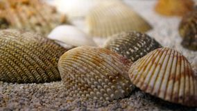 Sea shells in the sand  background. Some sea shells details, sea shells resting over sand in a museum exhibition, brown, black and white spotted shells Stock Image