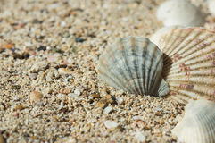 Some sea shells in sand. Close up stock images