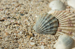 Some sea shells in sand. Close up Stock Photography