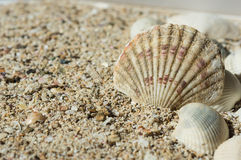 Some sea shells on sand. Close up stock photos