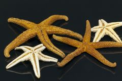 Some of sea stars on black background. Some of starfishs on black background stock image
