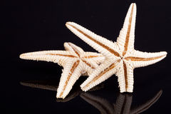 Some of sea stars isolated on black background.  Stock Image