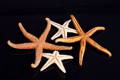Some of sea stars isolated on black background Royalty Free Stock Photos