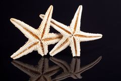 Some of sea stars isolated on black background. Close up Stock Photos