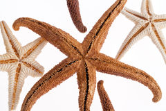 Some of sea stars isolated on white background.  stock image