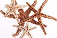 Some of sea stars isolated on white background.  stock images