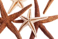 Some of sea stars isolated on white background macro. Some of sea stars isolated on white background closeup royalty free stock photo