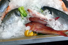 Some seafood on ice at the harbor of Chania. Crete, Greece. Royalty Free Stock Photo
