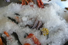 Some seafood on ice at the harbor of Chania. Crete, Greece. Stock Photos