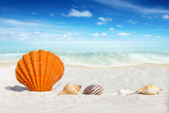Some Seashells on the Beach. Scallop Seashell and some others Seashells on the Beach with much Copy Space Stock Photo