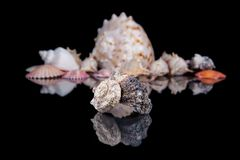 Some seashells on black background, close up . Some seashells on black background, close up stock image