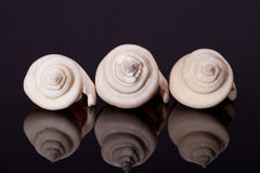 Some seashells on black background with reflection.  royalty free stock photos