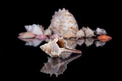 Some seashells isolated on black background. Close up stock image