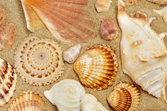 Some seashells on the sand of a beach. Closeup of some seashells on the sand of a beach royalty free stock photos