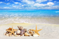 Some Seashells and Starfish on the Beach. With Seagulls in the Sky and much Copy Space Royalty Free Stock Photos