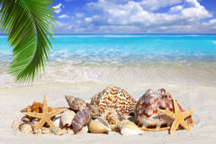 Some Seashells and Starfish on the Beach. With Seagulls in the Sky and much Copy Space Stock Photo