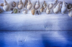 Some shells on wood tables Royalty Free Stock Images