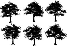 Some silhouettes of trees a  Royalty Free Stock Images