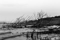 Some skeletal trees and branches on a lake shore, beneath a clou Stock Photo