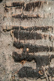 Some skin of coconut tree burnt wood texture Stock Image