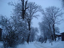Some sky with trees. Did you ever see winter in Ukraine Royalty Free Stock Photography