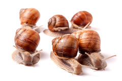 Some snails crawling on a white background closeup.  royalty free stock photo