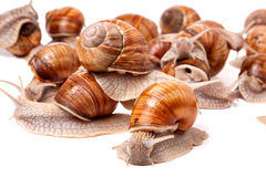 Some snails crawling on a white background closeup.  Royalty Free Stock Photography
