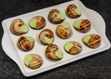 Some snails on a plate. With garlic sauce on the table Stock Image
