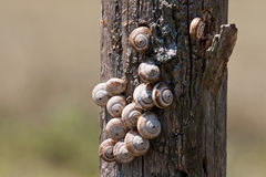 Some snails on a stump Stock Photo