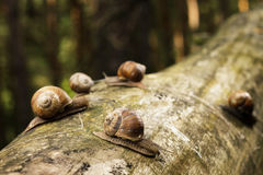Snails on tree stem in forest Stock Images