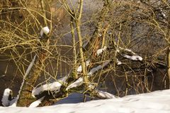 Some snow on branches. A tree with some snow on branches. There are branches without snows. Branches have no sheet leaf. Shooting in the day, in winter and royalty free stock photos