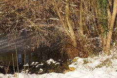 Some snow in forest - France. Landscape wintry, snowy forest, trees with some snow on branches, ice-cold lake. A tree with some snow on branches. There are stock photos